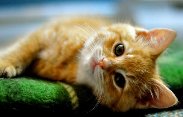 Mabel [5] kitten