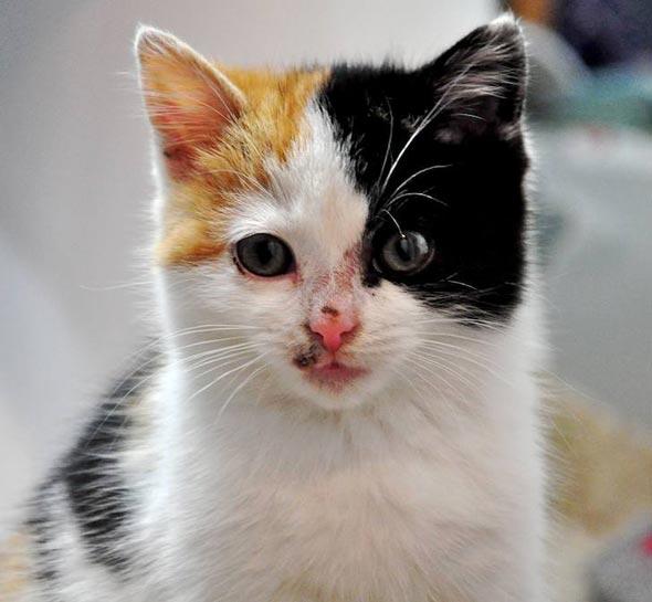 Junebug [5] kitten