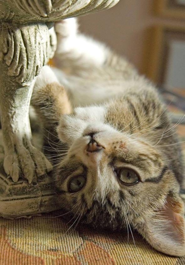Miss Newton [3] kitten