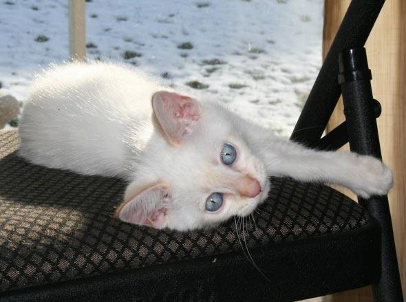 General Tso [3] kitten