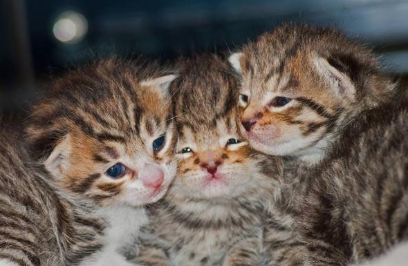 Poppy's Kittens [5]  kitten