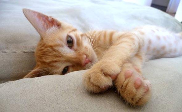 Tobias  kitten