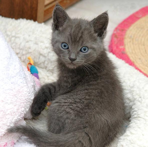 Ashton [4] kitten