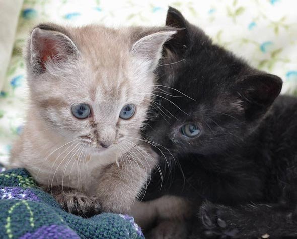 Mystic and Magic  kitten
