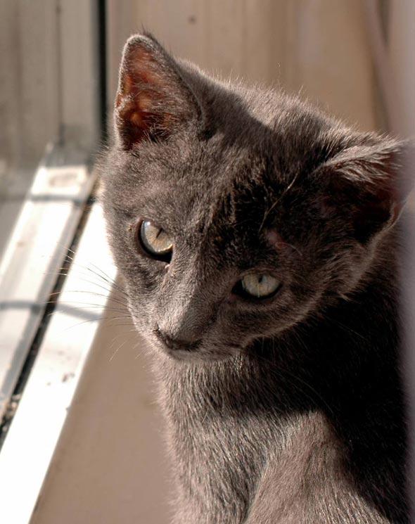 Grant [4]  kitten