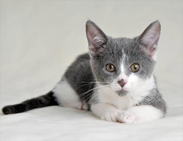 Tucker [4]  kitten