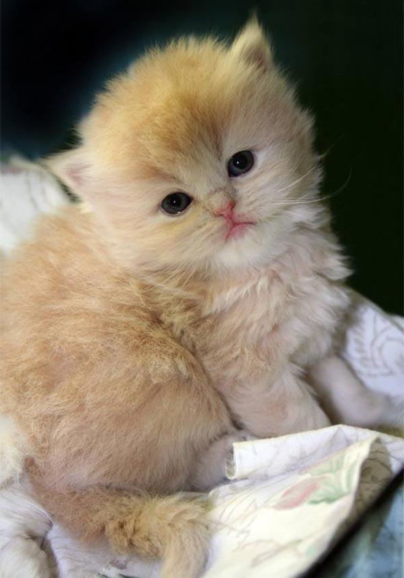 Mars [4] kitten