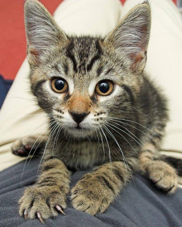 Sam [3] kitten