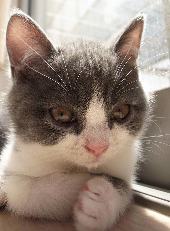 Ani [4] kitten
