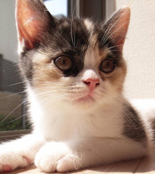 Imoto [5] kitten
