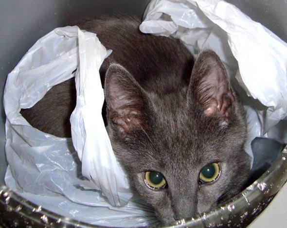 Wyatt [5] kitten