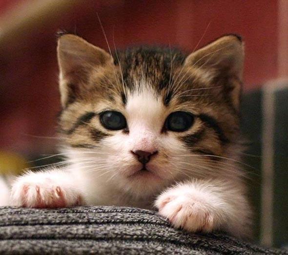 Baffle [4]  kitten