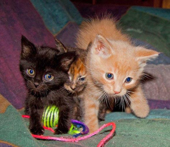 Foster Kittens in Alaska [4]  kitten