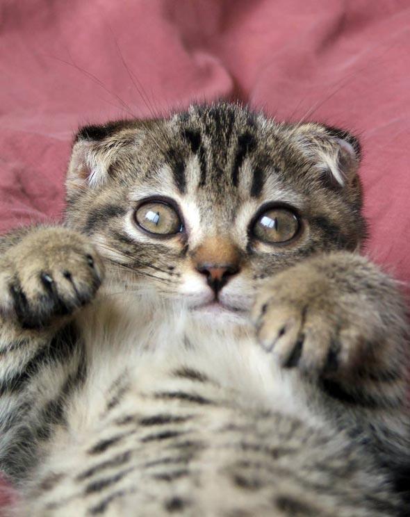 Bredren  kitten