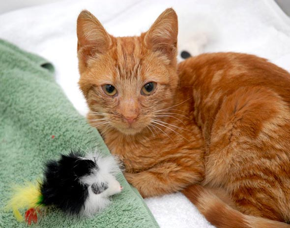 Cisco  kitten