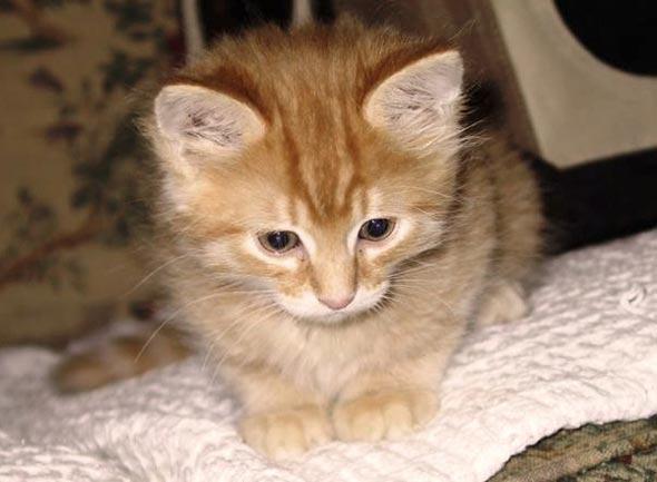 Julius [4] kitten