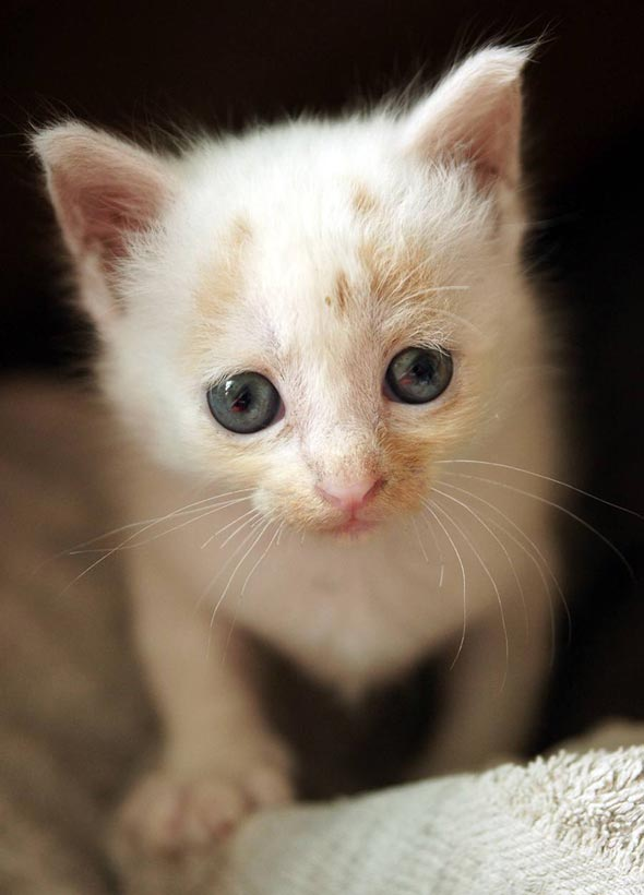 Utopia  kitten