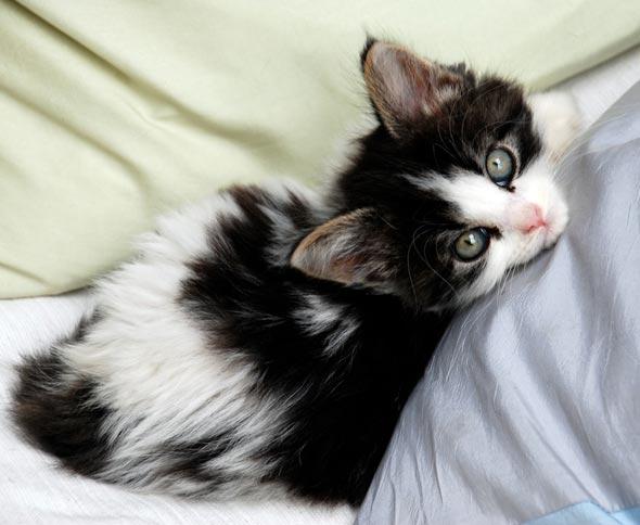 Daphne [3] kitten