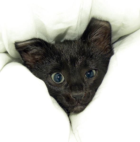 Santo [3] kitten