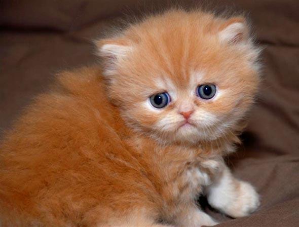 Rolex [3] kitten