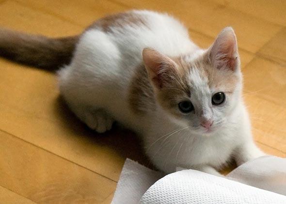 Milo [3] kitten