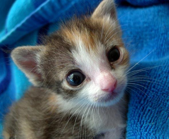 Enid [4] kitten