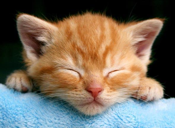 Nimbus  kitten