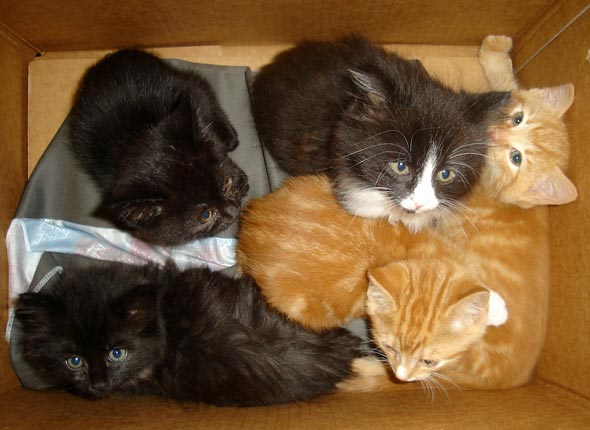 Smoggy's Friends: Milly, Polly, Cocoa, Boots & Randi [4] kitten