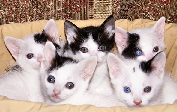 Domino's Kittens [4] kitten