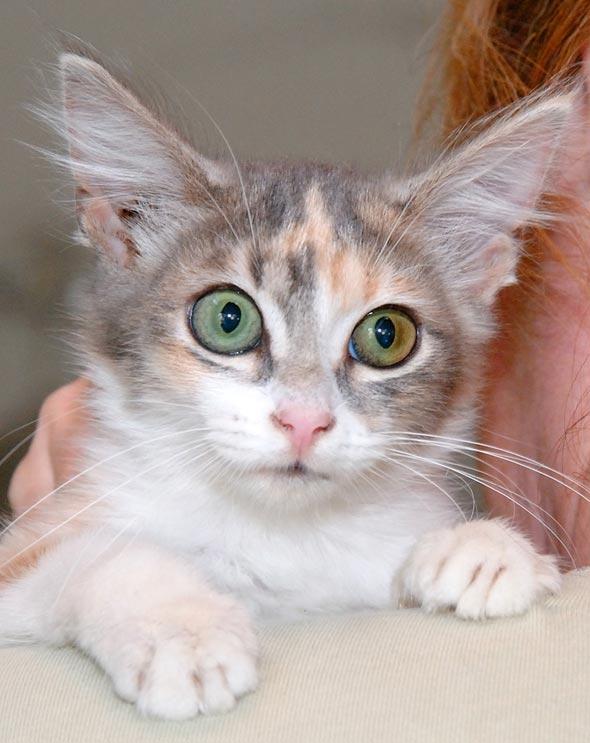 Denise's Fosters [5] kitten