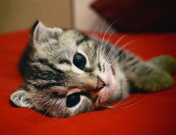 Didi [4] kitten