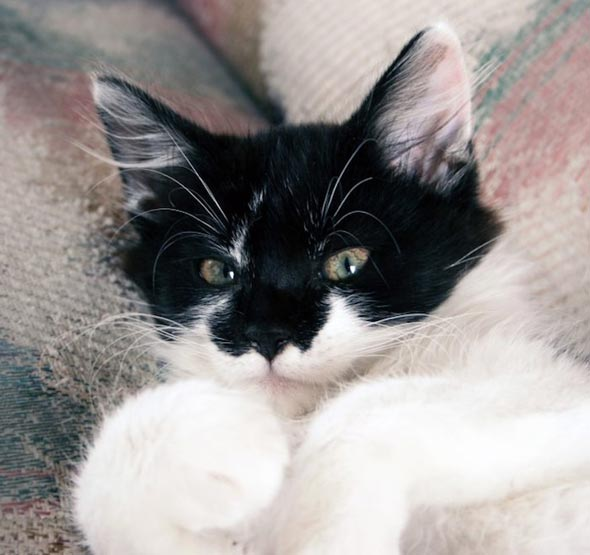 Lucy [4] kitten
