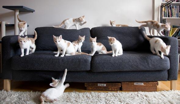 Encore: Milo and Lyra [5] kitten