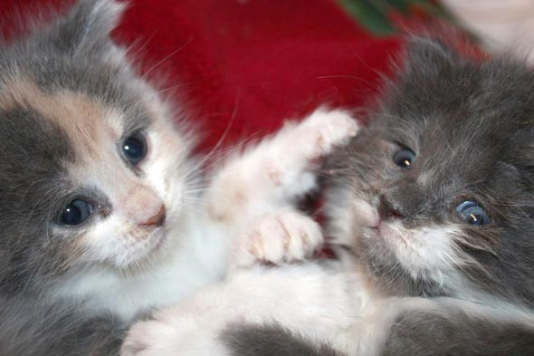 Pansy and Buddy [5]  kitten