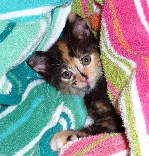 Missy [5] kitten