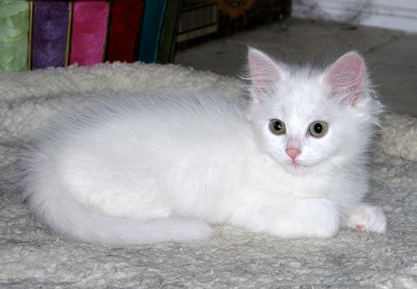 Weebles [5]  kitten