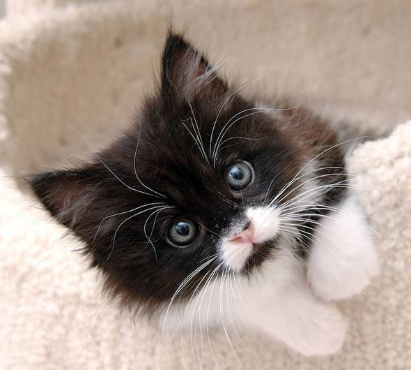 Andy [4] kitten