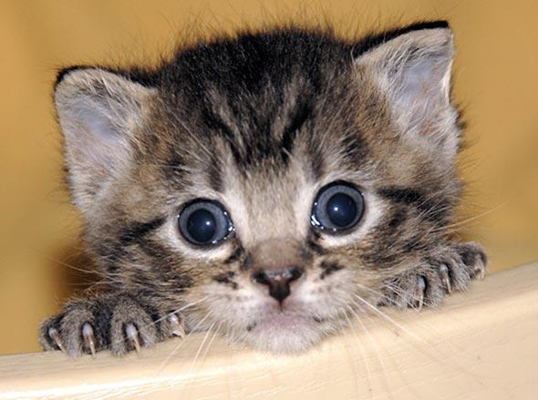 Spike [5]  kitten