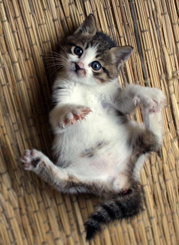Encore: Baffle [5]  kitten