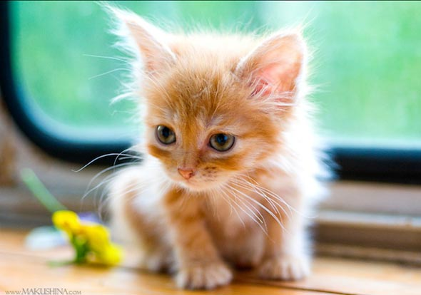 Bree [4]  kitten