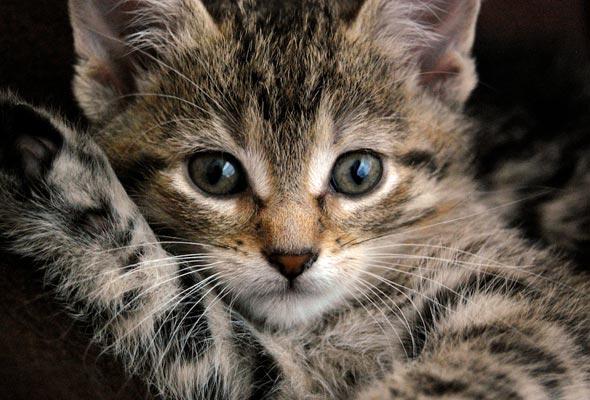 Fiona  kitten
