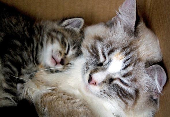 Ming's Babies Part 1: Jezebel  kitten
