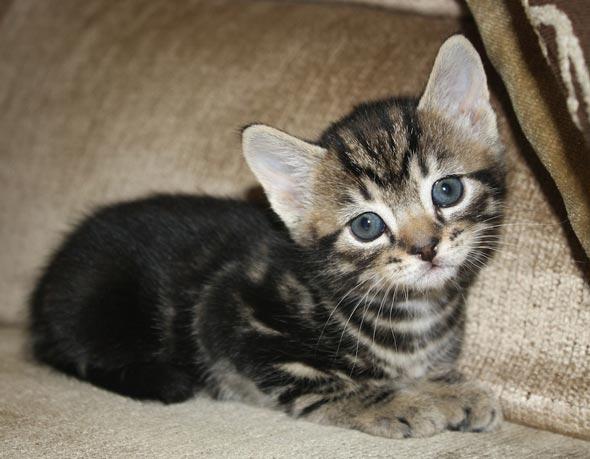Diego  kitten