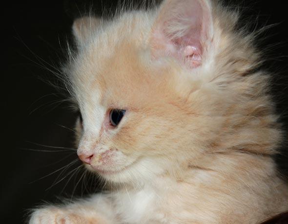 Dior  kitten
