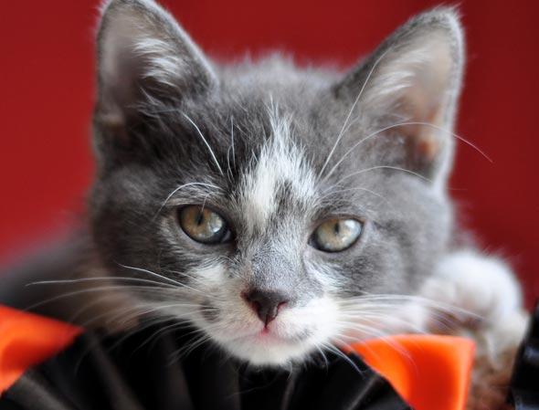 Isabella's Kittens' Friend Flipper [5] kitten