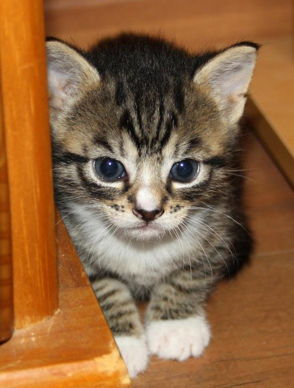 Karina's Kittens Part 1: Dobby  kitten