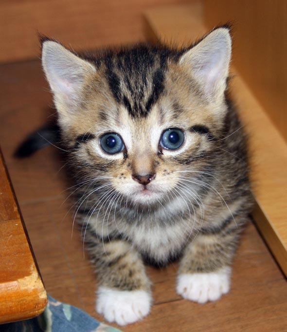 Karina's Kittens: Sméagol [5]  kitten