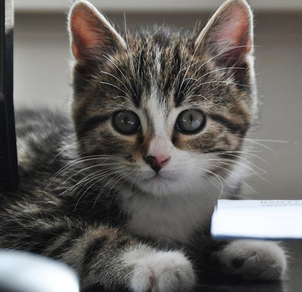 Kiwi [4] kitten
