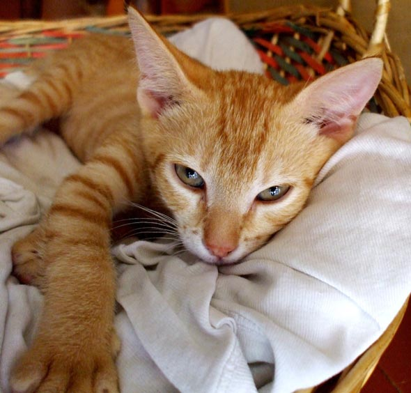Felix [3] kitten