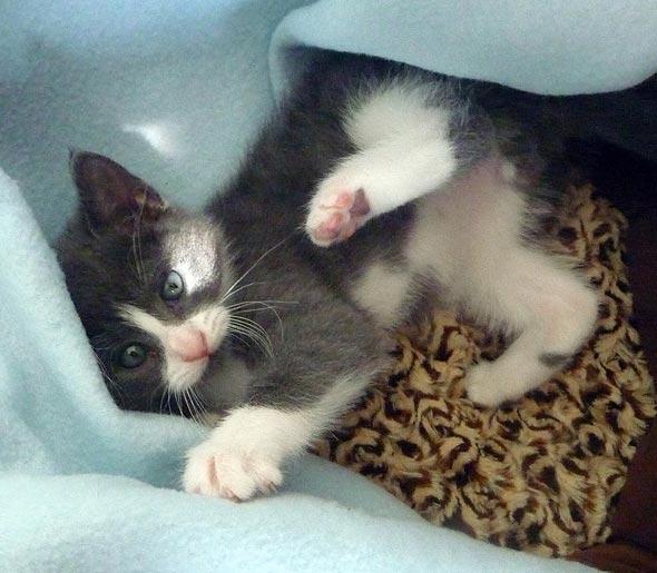 Mambo Italiano [4]  kitten